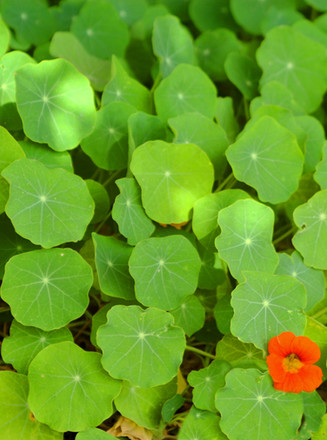 Cluster of Green Leaves