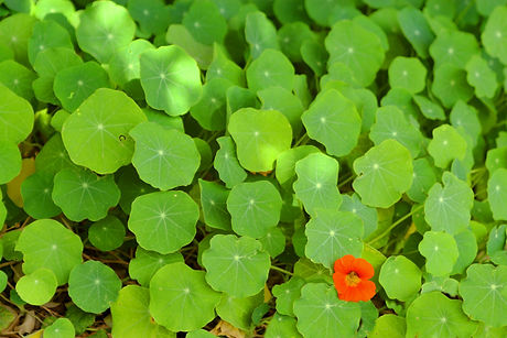 Groupe de feuilles vertes
