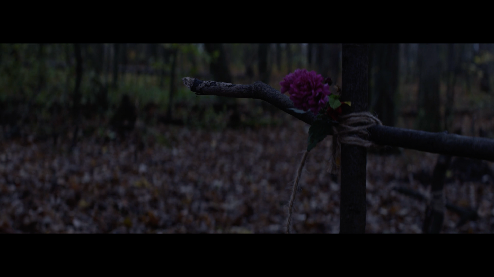 Screen Shot 2019-01-18 at 5.30.52 PM.png