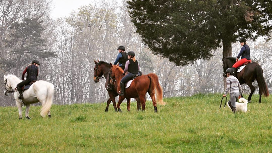 Horses for sale, eventing, horse training, equestrian, tryon equestrian center, thoroughbred horse
