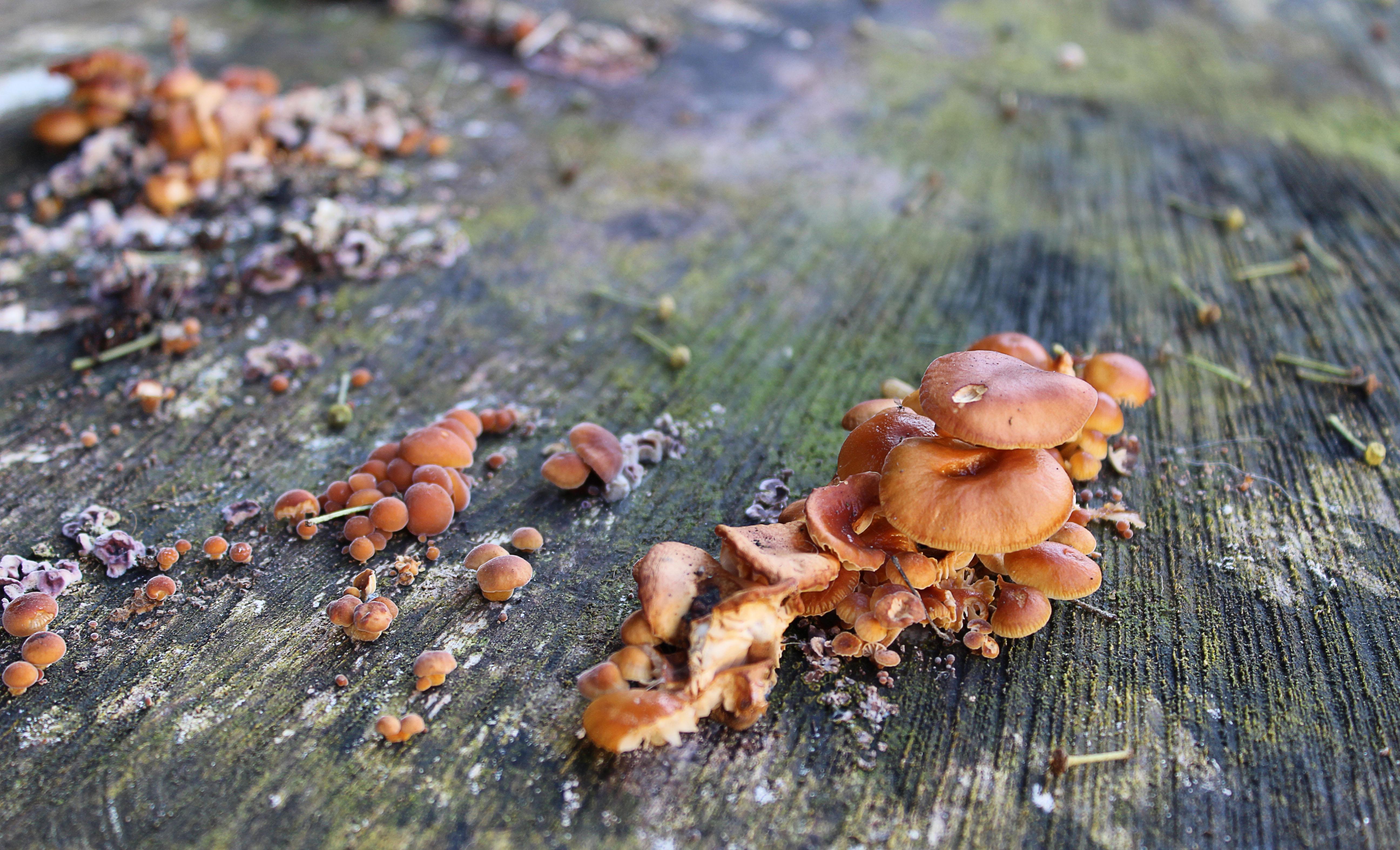 Mushrooms on tree truck
