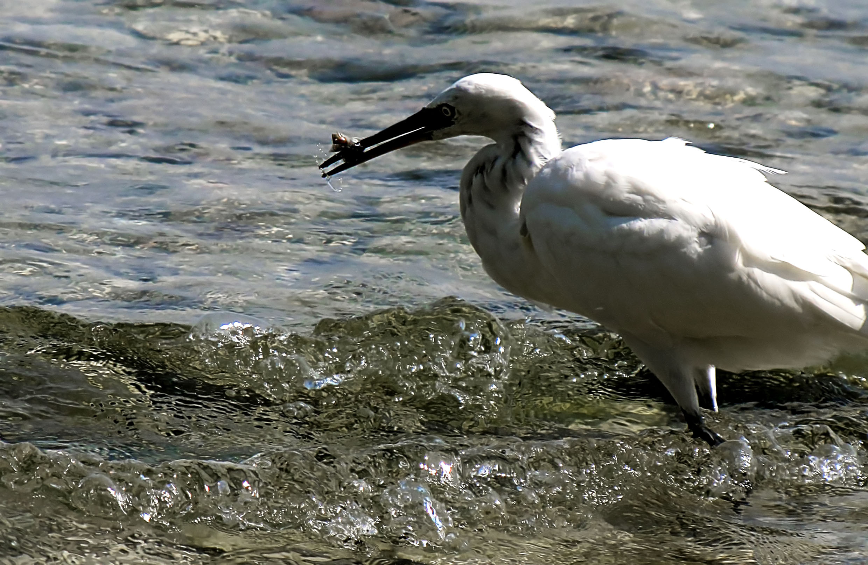 Crane on lake Garda Italy