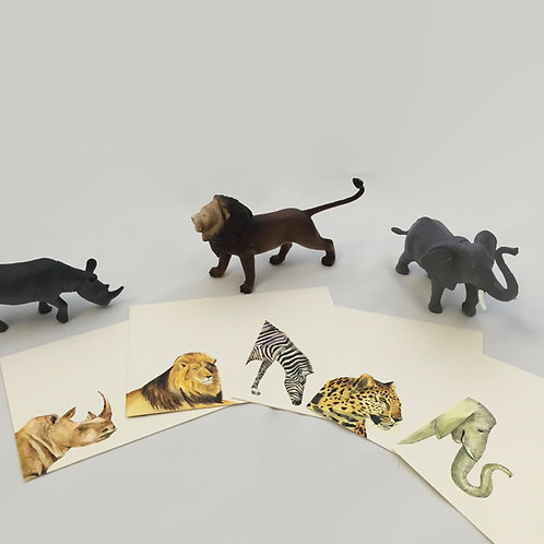 Safari Collection Note Cards