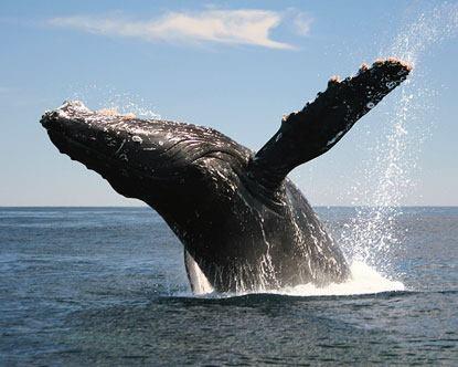 Whale Watching + Ocean Life