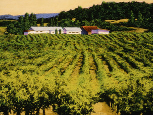 Sonama Vineyard