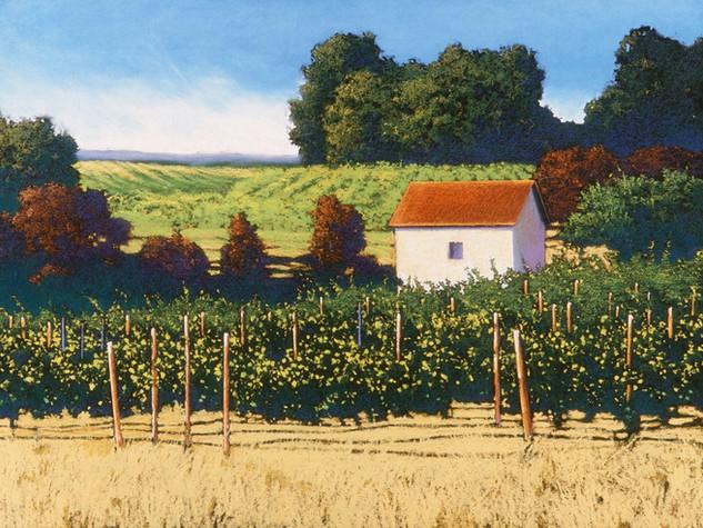 Grape Vines, Napa