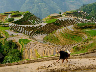 Lao Tzu's Path of Inner Silence