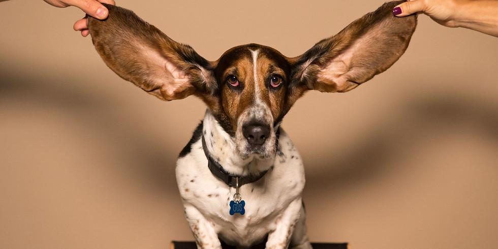 Die Kunst des Zuhörens