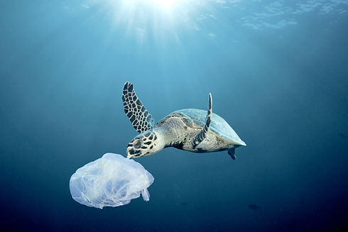 Sea turtle with plastic bag in the ocean