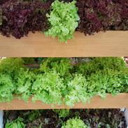 Vegetable Salad in the Wooden vegetable