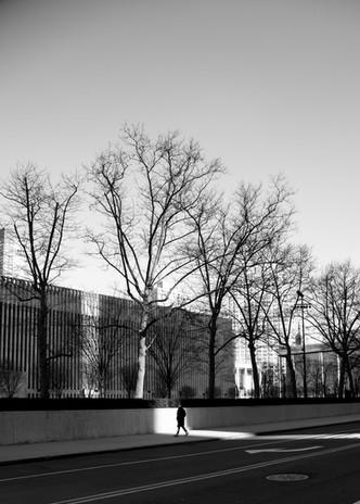 Lincoln Trees.jpg