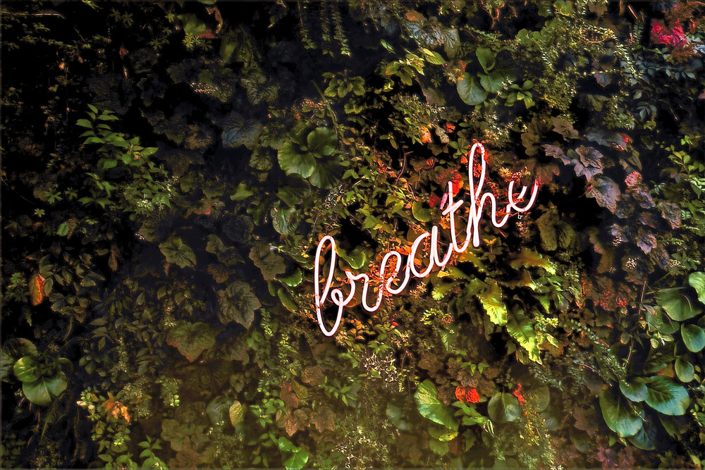 breathe words with leaves underneath