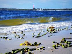 beach with seaweed