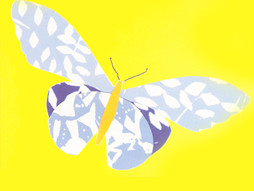 משק כנפי הפרפר