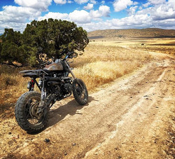 Fast sweepers through golden fields and one lonely tree #pitstop #triumphscrambler #enduromundo #tri