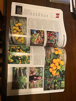 Baker Creek Heirloom Seeds Whole Seed Catalog
