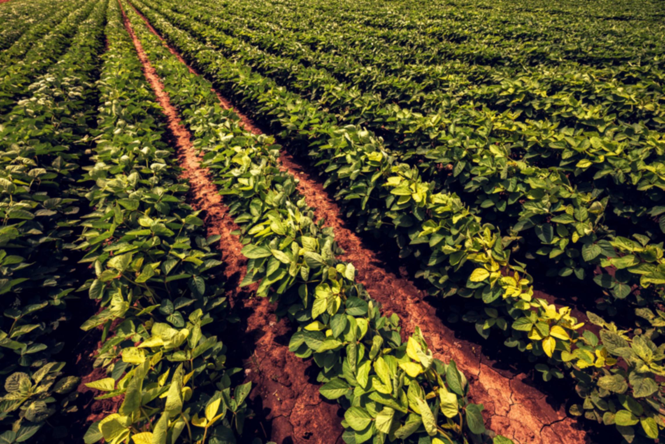soybean-farming-YEX2QDJ.jpg