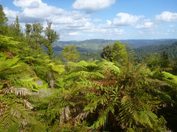 Hiking in the NZ wilderness