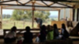 Sheep Shearing Experience at Roselands