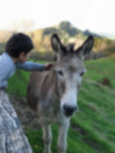 Gonzales the donkey at Roselads Restaurant