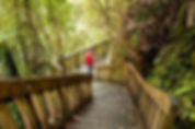 waitomo caves guided tours,waitomo caves new zealand glowworm tours,waitomo caves shuttle service,things to do in waitomo caves,transfers at waitomo caves,ruakuri night glowworm tours,marakopa falls shuttle service waitomo caves,
