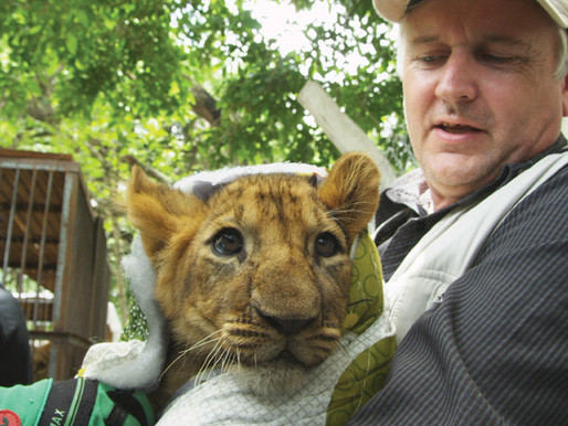 Lion Ark documentary film