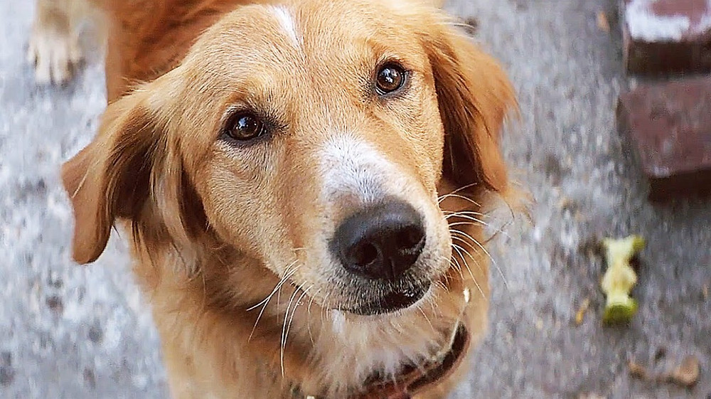 A Dog's Purpose film review UK