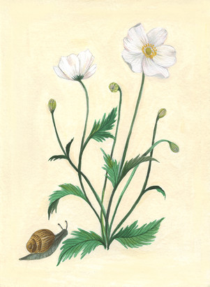 Anemone and snail