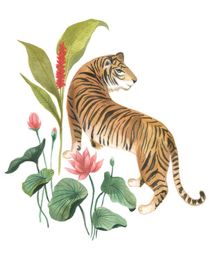 Tiger and lotus flowers