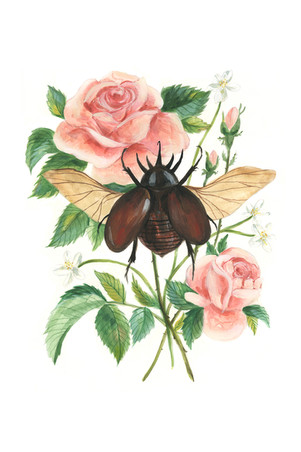 Stag Beetle and Rose