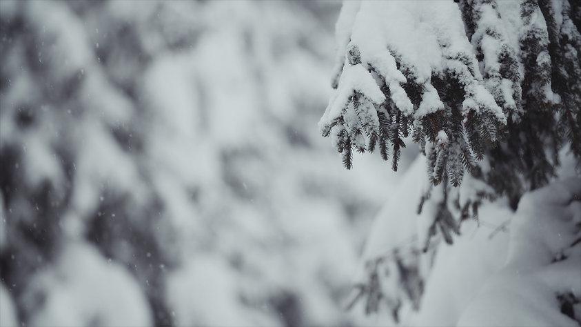 snowfall 22.jpg