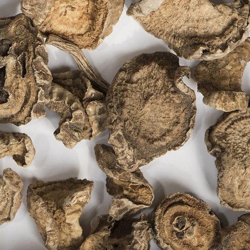 Porított ördögcsáklya (Harpagophytum procumbens)