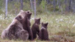 preview_brown-bear-family.jpg