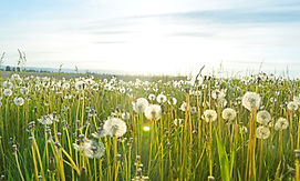 Image of grass and flowers to represent Allergy Testing