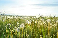 allergies et biorésonance