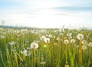 Effective Hay fever Prevention