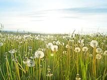 WELLNESS WEDNESDAY: ALLERGY RELIEF TIPS