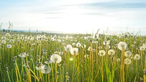 Allergie primaverili: come lenire i sintomi con gli oli essenziali