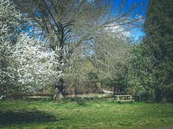 River bank in Spring