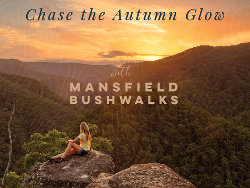 Chase the Autumn Glow in the High Country