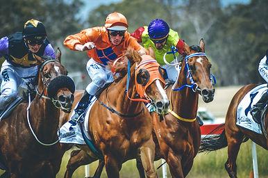 MDRC - Horses Zoom 2.jpg