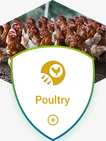 poultry disease bacteria virus infection control