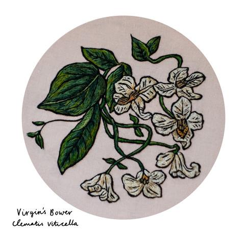 Virgin's Bower Print (small).jpg