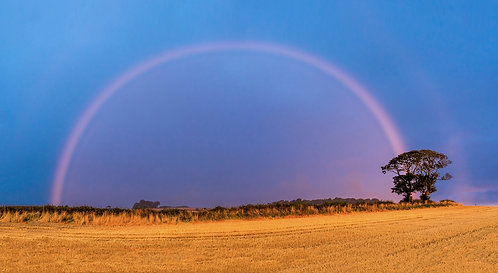 """Pink Rainbow by the Kissing Trees"" - Photographic Print"