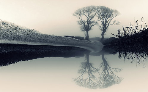 """""""Kissing Trees, Fogged and Flipped"""" - Photographic Print"""