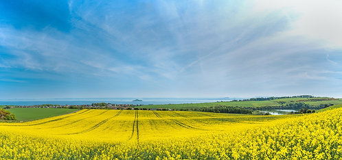 """Canola Fields by Kinghorn Loch"" - Photographic Print"