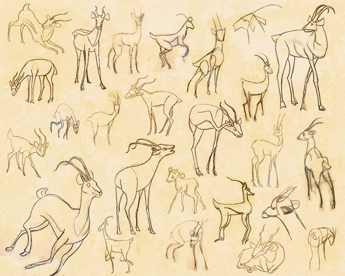 Antelope studies