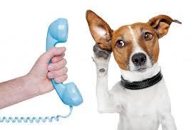 Why Animal Communication?