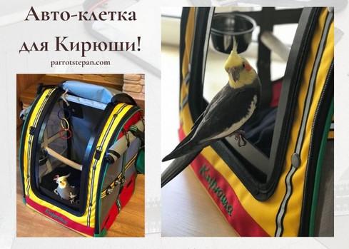 Корелла Кирюша