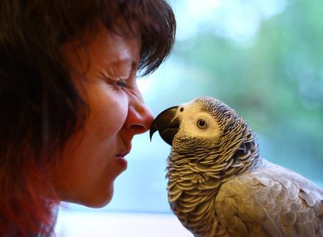 Решили завести попугая?